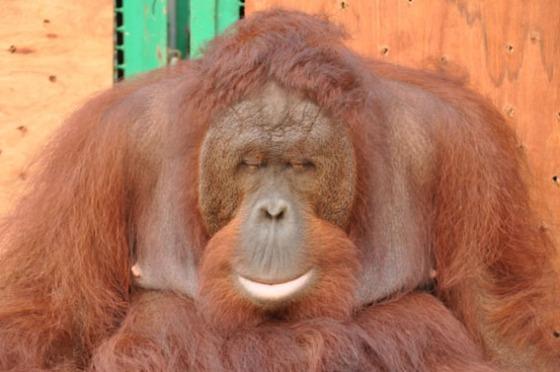 At long last, Bonet leaned on his travel cage and went to sleep [photo by: Indrayana]